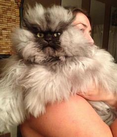 Behold, Colonel Meow