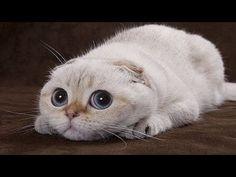 Beste lustige Katzen und Hunde 2016. Katze schlägt fehl, Hund nicht. Lustige Haustiere - YouTube
