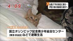 台風で避難してる住民が可愛すぎるwww cat 子猫