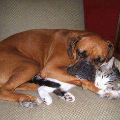 Awwww cuddle buddies <3