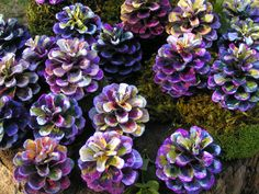 Popular items for pine cone flowers on Etsy