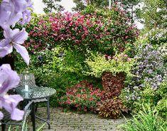 Welcome to my garden gallery Brick Garden, Garden Design, Gallery, Plants, Roof Rack, Landscape Designs, Plant, Planets, Yard Design
