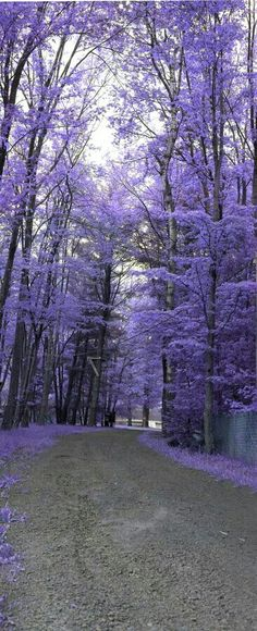 Purple Path,This is the path down to Lake Bryn Mawr, PA. I love jacarandas! Beautiful World, Beautiful Places, All Things Purple, Purple Stuff, Belle Photo, Pretty Pictures, Beautiful Landscapes, The Great Outdoors, Wonders Of The World