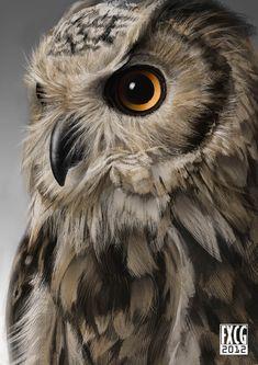 Pin by Emkay Fosnacht on Birds Owl Bird, Bird Art, Pet Birds, Beautiful Owl, Animals Beautiful, Cute Animals, Owl Photos, Owl Pictures, Regard Animal