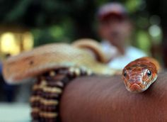 """Wrapped Up 
