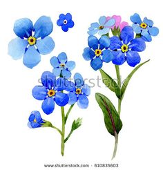 more forget me nots