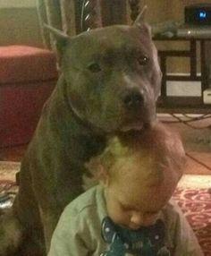 104 best pitbulls so pretty images on pinterest pit bull terriers