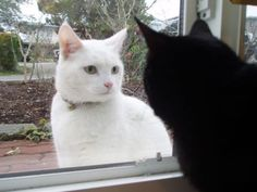 窓越しの見つめ合い /  look at each other through a window...