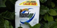 """Glyphosate Hurts Gut Microbiome, Genes And Sexual Development At """"Safe"""" Dose Gut Microbiome, Environmental Health, Detox Drinks, Drinking Water, It Hurts, Food, Rats, Breast Cancer, Dna"""