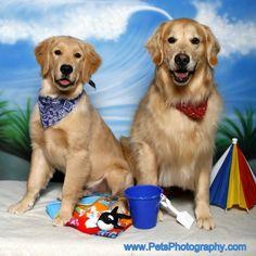 "Golden Retreivers on the ""beach"" from Pet Photographer Richie Schwartz"