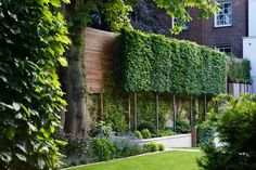 - My Garden hornbeam hedges pleached so they grow together at the top. garden privacy with layershornbeam hedges pleached so they grow together at the top. garden privacy with layers Garden Privacy, Backyard Privacy, Garden Landscaping, Garden Hedges, Contemporary Garden Design, Landscape Design, Small Gardens, Outdoor Gardens, Hornbeam Hedge