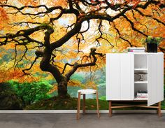 Autumn Maple - Wall mural, Wallpaper, Photowall, Home decor, Fototapet