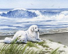 GREAT PYRENEES At The Beach Dog Art Print Signed by Artist D J Rogers