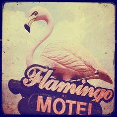 Flamingo motel sign