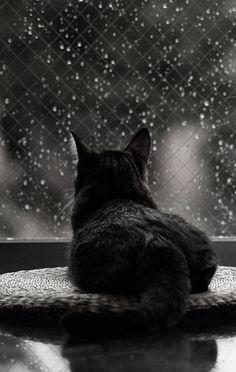 Chuva, Preto e Branco, Gatos - uma paixão Chuva, Gatos Loucos, Gatinhos f2d8ddbfa0