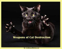 Weapons of Cat Destruction