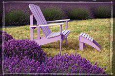 Lavender+Garden+Ideas | ... garden design and landscape inspiration and ideas Studio G, Garden