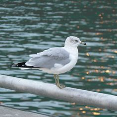 Taken at Harbourfront in Toronto just as the sun was going down