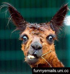 funny | Super funny animals