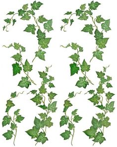 ivy fairy green leaf picture and wallpaper