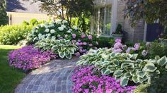annabell, liberty hosta, petunia Vista Bubblegum