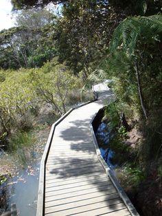 Dawnhaven Esp, Te Atatu Peninsula, Auckland, New Zealand. More on walks at http://www.aucklandcouncil.govt.nz/EN/parksfacilities/walkingtracks/Pages/westwalkways.aspx