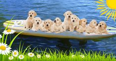 How many pups can you fit on a paddle board? Who cares, they're so dang cute! Happy Spring, Paddle Boarding, Stand Up, Polar Bear, Pup, Animals, Get Back Up, Animales, Dog Baby