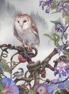 Owl Bird, Bird Art, Illustration Art, Illustrations, Watercolor Bird, Beautiful Birds, Painting & Drawing, Amazing Art, Fantasy Art