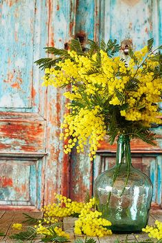 mimose in vaso Deco Floral, Arte Floral, Yellow Flowers, Beautiful Flowers, Unusual Flowers, Deco Nature, Mimosas, Pretty Wallpapers, Painting Inspiration