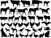 la collecte des animaux de ferme - vecteur stock photography