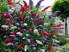 Tiny Flowers, Cut Flowers, Butterfly Bush, Tomato Seeds, Yard Art, Bright Pink, All The Colors, Shrubs, House Plants