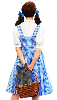 US Tour Wizard Of Oz Musical, Musicals, Tours, Musical Theatre