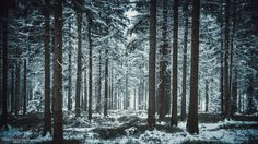Winter Forest (25)