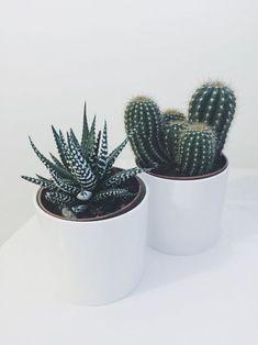 Cute house plants