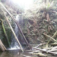 Marriners Falls and Brown Snakes... -27.02.2016  #australia #reisen #travel #australien #waterfall #marrinersfalls #brownsnake #rainforest #regenwald #wasserfall #greatotwaynationalpark #greatotway #apollobay by yoyomaus http://ift.tt/1LQi8GE
