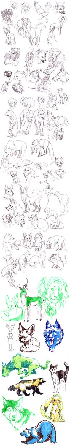 Animals Sketches by *MisterKay on deviantART