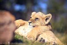 I can do it! Enjoy interacting with the amazing and sweet little cubs