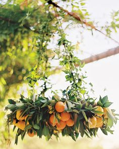A ring of oranges, lemons, and kumquats hung over the couple's pixie-tangerine cake.