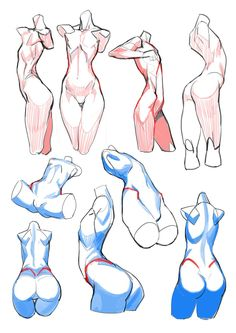 Healthy living tips diet plan free online Anatomy Sketches, Anatomy Drawing, Drawing Sketches, Art Drawings, Figure Drawing Reference, Body Reference, Anatomy Reference, Figure Drawing Female, Body Drawing