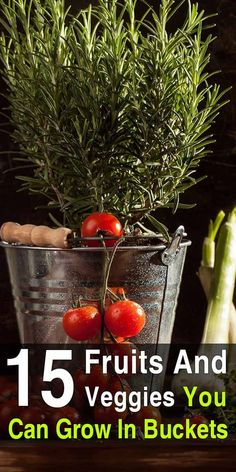 Container Gardening For Beginners Not only is bucket gardening a great solution for people with limited space, it has many advantages over traditional gardening. Bucket Gardening, Indoor Vegetable Gardening, Home Vegetable Garden, Organic Gardening Tips, Hydroponic Gardening, Hydroponics, Container Gardening, Urban Gardening, Gardening Vegetables