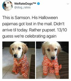 Spread Humour Over The World Cute Funny Animals, Cute Baby Animals, Funny Cute, Animals And Pets, Cute Puppies, Cute Dogs, Jiff Pom, Dog Rates, We Rate Dogs