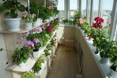 ШИКАРНЫЙ ЦВЕТНИК ДОМА — ЭТО РЕАЛЬНОСТЬ! СЕКРЕТ – В ПОДКОРМКЕ! ТОП 9 ХИТРОСТЕЙ… – БУДЬ В ТЕМЕ Anniversary Decorations, Balcony Garden, House Plants, House Design, Colorado, Floral, Outdoor Decor, Nature, Flowers