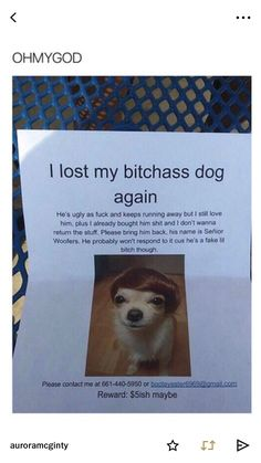Bad language lol but too funny not to repost! Stupid Funny, Funny Cute, Really Funny, Funny Texts, Funny Jokes, Hilarious, Animal Memes, Funny Animals, Funny Pins