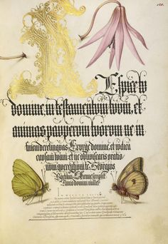 Joris Hoefnagel (illuminator) [Flemish / Hungarian, 1542 - 1600], and Georg Bocskay (scribe) [Hungarian, died 1575], Dog-Tooth Violet and Butterflies, Flemish and Hungarian, 1561 - 1562; illumination added 1591 - 1596