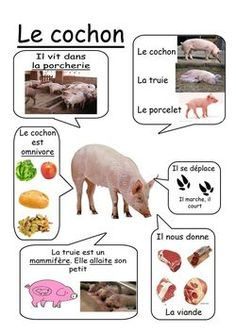 Cochon - Animaux de la ferme animals silly animals animal mashups animal printables majestic animals animals and pets funny hilarious animal French Teacher, Teaching French, How To Speak French, Learn French, French Education, Kindergarten, French Classroom, French Lessons, Animal Projects