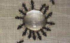 Une astuce incroyable pour se débarrasser des fourmis en une nuit !