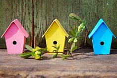 Get started adding birdhouses to your yard in five easy steps that will keep bird families safe and comfortable as they raise chicks.