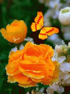 Watch and share Butterfly GIFs on Gfycat Butterfly Gif, Butterfly Pictures, Butterfly Wallpaper, Flowers Gif, Glitter Flowers, Pretty Flowers, Beautiful Gif, Beautiful Roses, Beau Gif