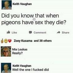 Did you know that when pigeons have sex they die? Funny Text Posts, Funny Texts, Give It To Me, How To Get, Tumblr Posts, Pigeon, Funny Pictures, Funny Pics, Popular Memes