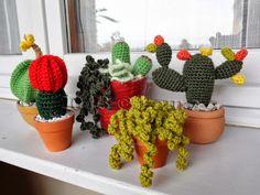 I fantastici cactus di Laura, spiegati da lei!! grazie!
